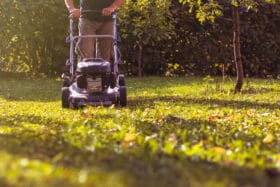 use lawn fertilizer from Revive!