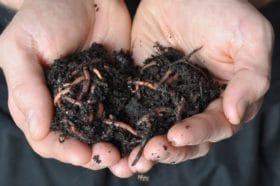 Tips For Good Bugs For Soil