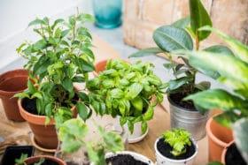 House Plant Benefits