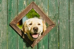 How To Green Up Dog Urine Spots In Grass
