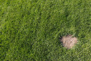 Getting Rid Of Brown Patches On Lawn