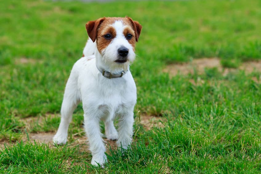 How To Revive Grass From Dog Urine Revive Lawn Care Products