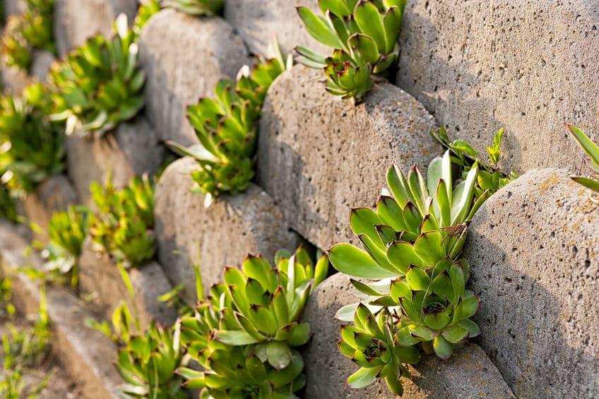 Organic Fertilizer Helps Drought Tolerant Grasses And Plants
