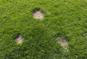Revive Grass With Dog Spot Treatments