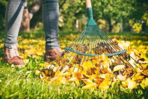 Fall Lawn Revive Products