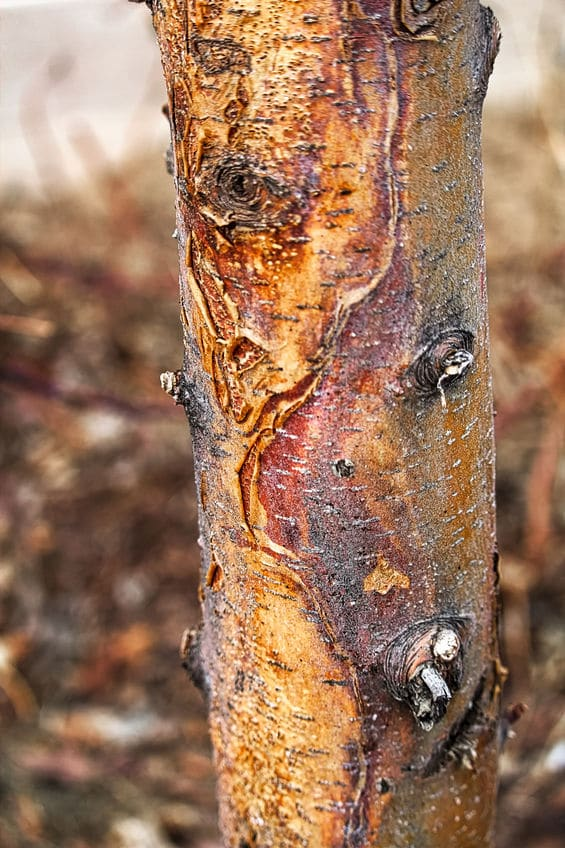 Use Revive Products To Help With Tree Scald