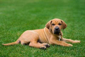 Treated Grass For Dog Urine Spots Beautiful Lawn