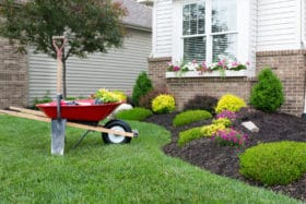 Keep Trees Shrubs And Grass Green