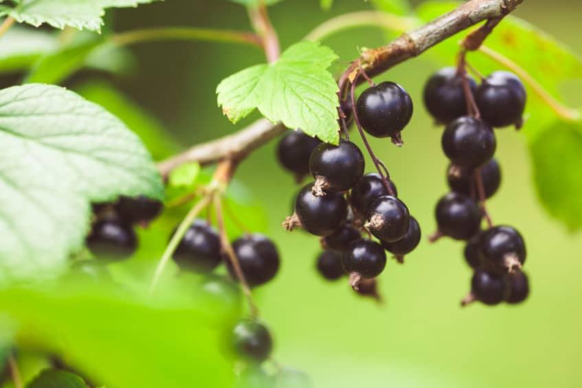 Organic Fertilizer For Growing Organic Plants