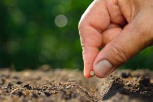Use Organic Fertilizer For New Seed Plants