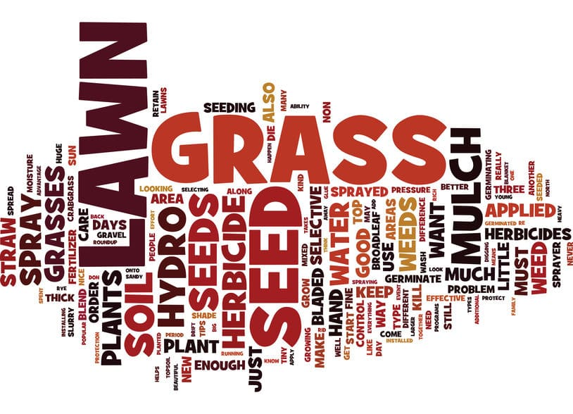 Beautiful Green Drought Tolerant Grass