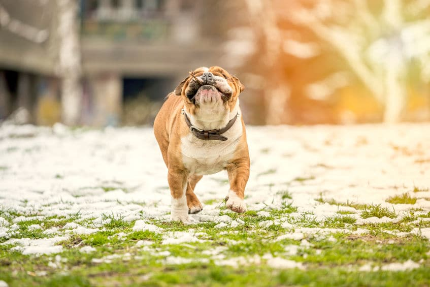 Take Care Of Dead Grass From Dog Urine