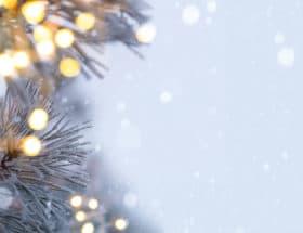 Winter Fertilize To Make Evergreens Heathy Christmas Decor