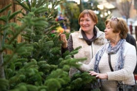 Choosing The Right Green Christmas Tree With Organic Fertilizer