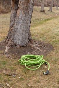 Winter Watering Applying Organic Fertilizer