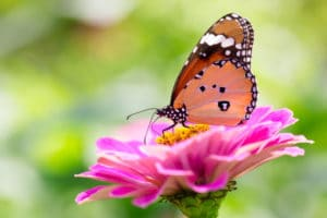 Lawn And Garden Fertilizer Won't Harm Good Bugs