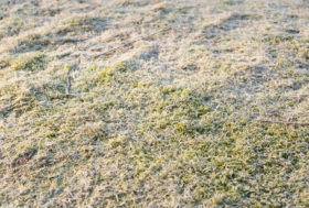 Drought Tolerant Lawn During Winter Months