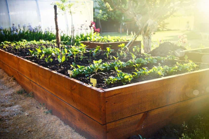 Revive Spring Garden Planning