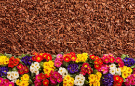 Revive Mulch Tips
