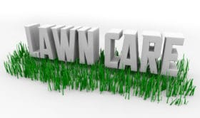 Lawn Care Organic Fertilizer Use