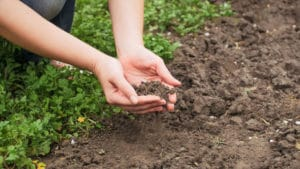 soil need treatment lacking nutrients