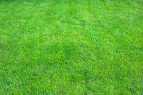 grass green how when to fertilize