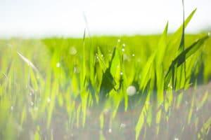 revitalize liquid fertilizer organic water