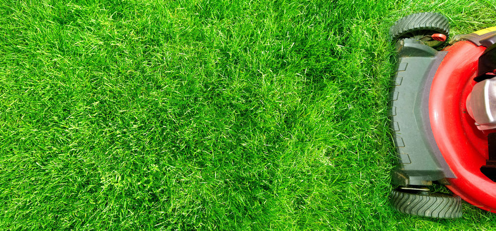 revive lawn mow grass