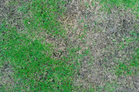patches on lawn need revive products