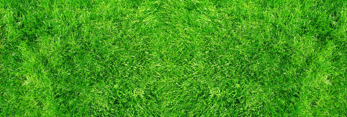 lawn care revive products fertilizers green grass