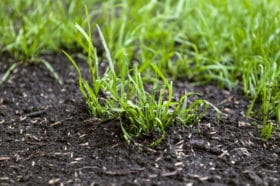 lawn care revive grass grow green lawn
