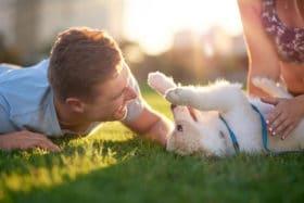 best grass drought tolerant pet friendly
