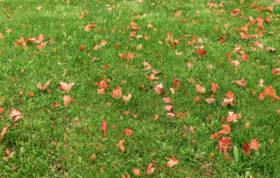 beautiful green lawn organic fertilizer