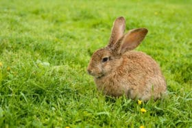 soil treatment for rabbits on lawn