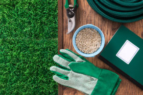 best lawn green fertilize and seed