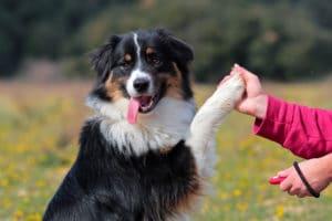 train dog keep dog urine spots dead grass at bay