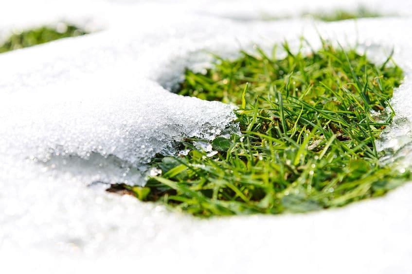 organic fertilizer used for winter preparation
