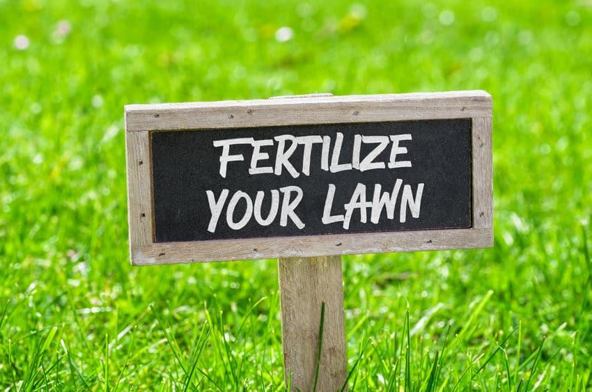 Organic Liquid or Granules To Fertilize Your Lawn