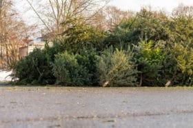 revive christmas tree disposal reuse mulch