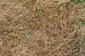 brown patches winter lawn care