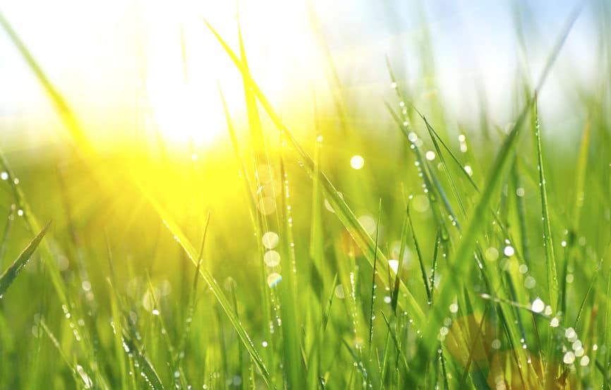 Spring lawn organic fertilizer applied healthy