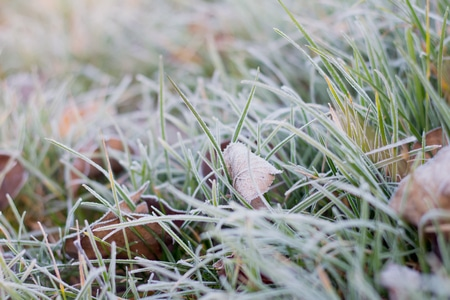 frost on lawn avoid walking on grass apply organic lawn products in Spring