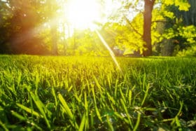 morning hours mowing grass apply revive products healthy lawn