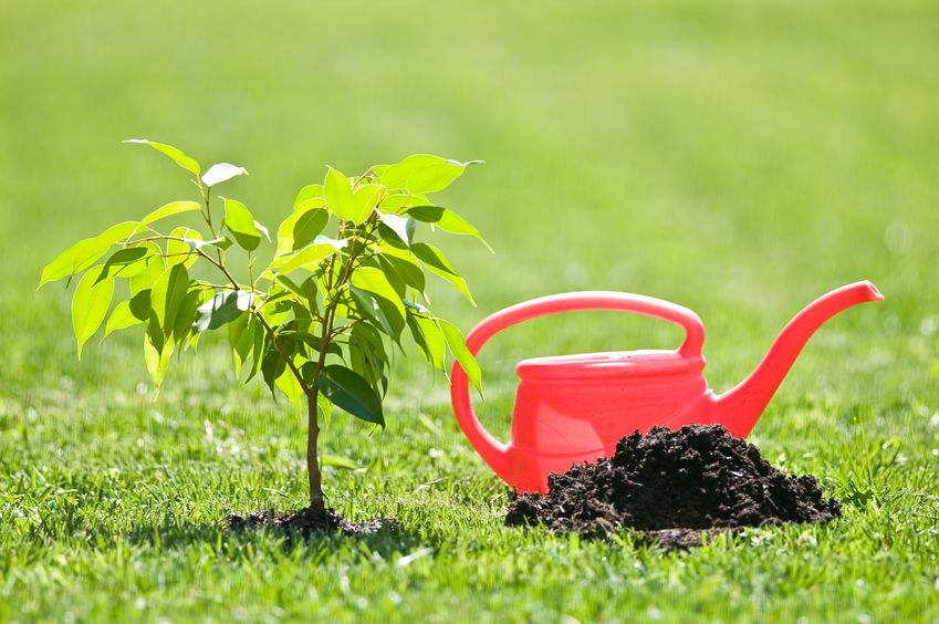 mom child planting tree soil treatment helps to grow