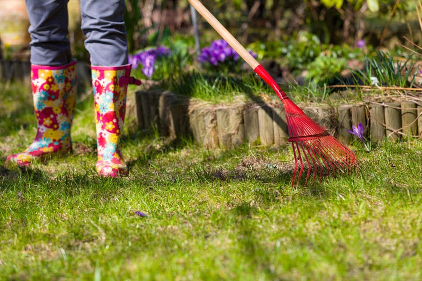 spring lawn green grass how to get best yard