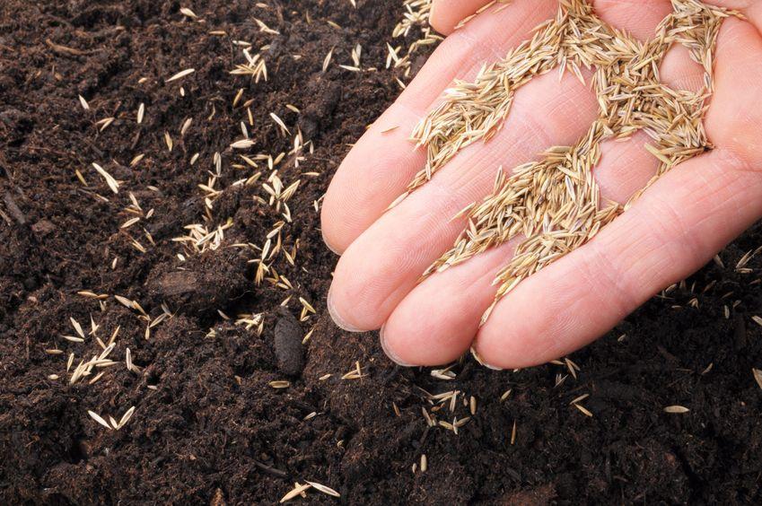 grass seed green lawn organic fertilizer