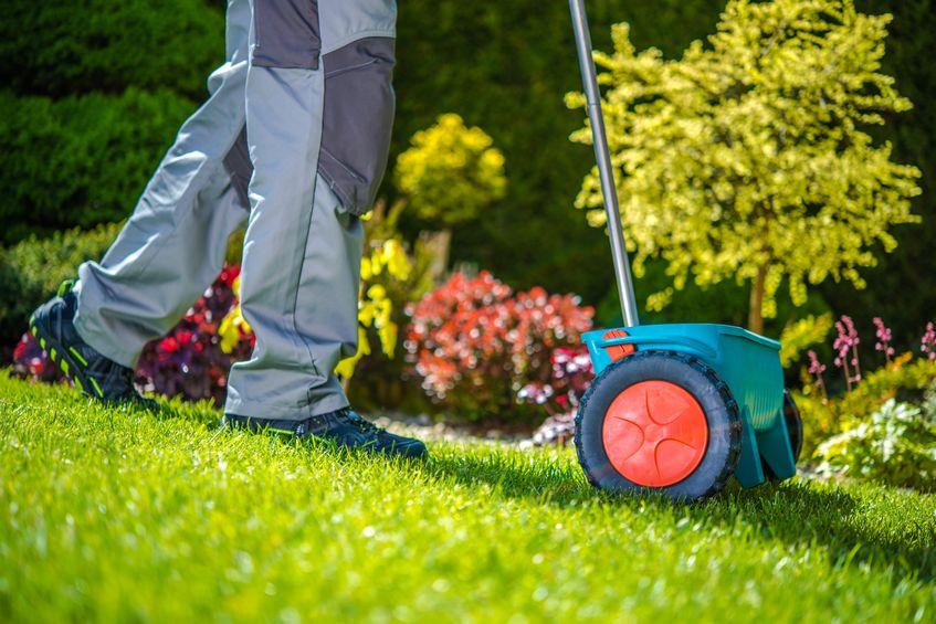 seeding drought tolerant grass watering demands